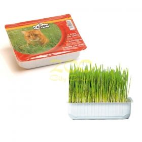 Camon Cat grass 100g - котешка трева  B162